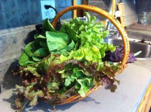 2014 garden produce